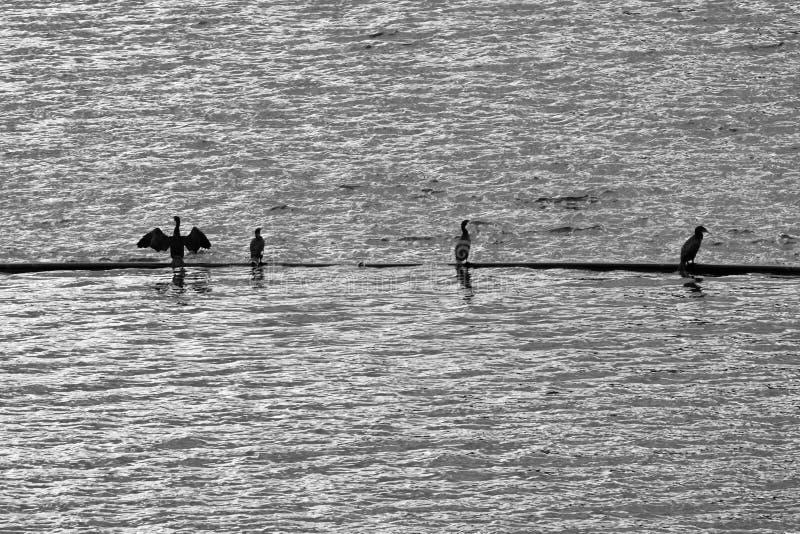Fishermans neri sul lago sanguinato fotografia stock
