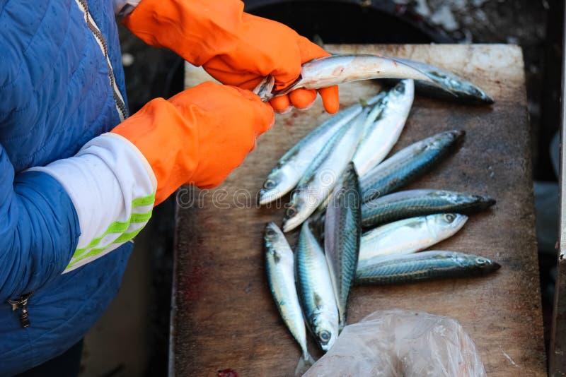 Fishermans ręki w pomarańczowych rękawiczkach patroszyje małej ryby Pullint żyłki za i roe jest koniecznym krokiem w rybim przero zdjęcie stock