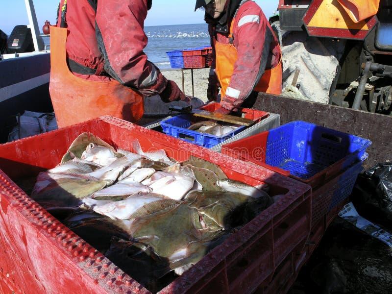 Download Fishermen stock photo. Image of denmark, saltwater, iced - 117042