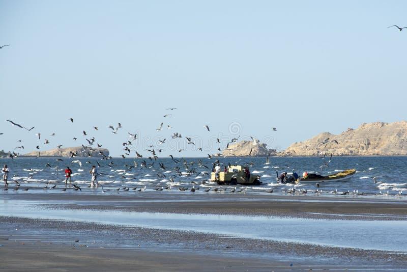 Fishermen at beach in Oman royalty free stock image