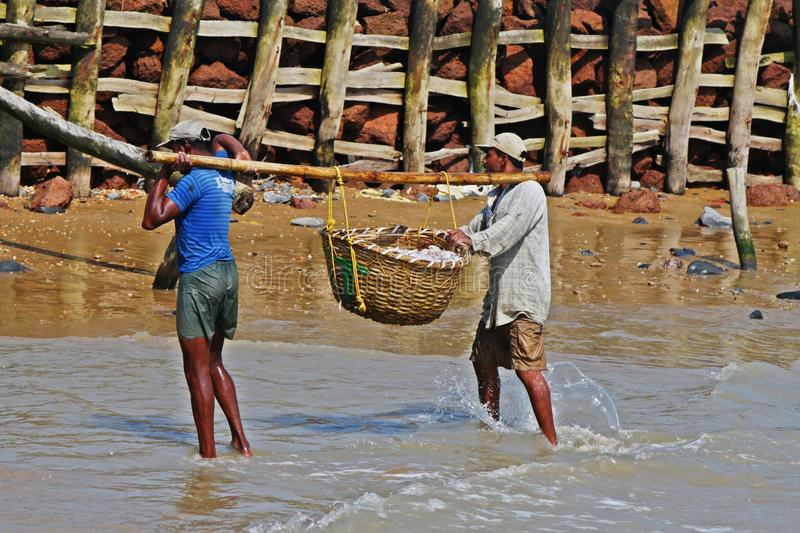 Fishermen carry boxes full of fishes at Digha, India. Fishermen carrying fish basket back from the sea stock photo