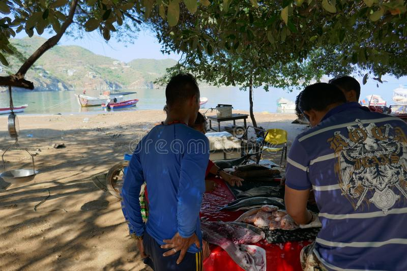 Fishermen cleaning and filleting royalty free stock photography