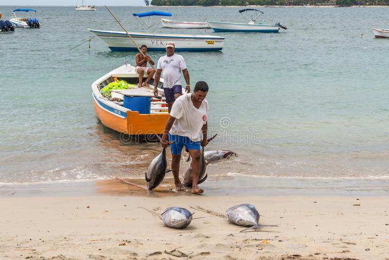 Fishermen in Mauritius. Tamarin, Mauritius - December 8, 2015: Unidentified fisherman carry tuna fish as they unload a catch from a boat at Tamarin Bay in royalty free stock image