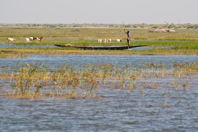 Fishermen in a pirogue in the Niger river. stock image