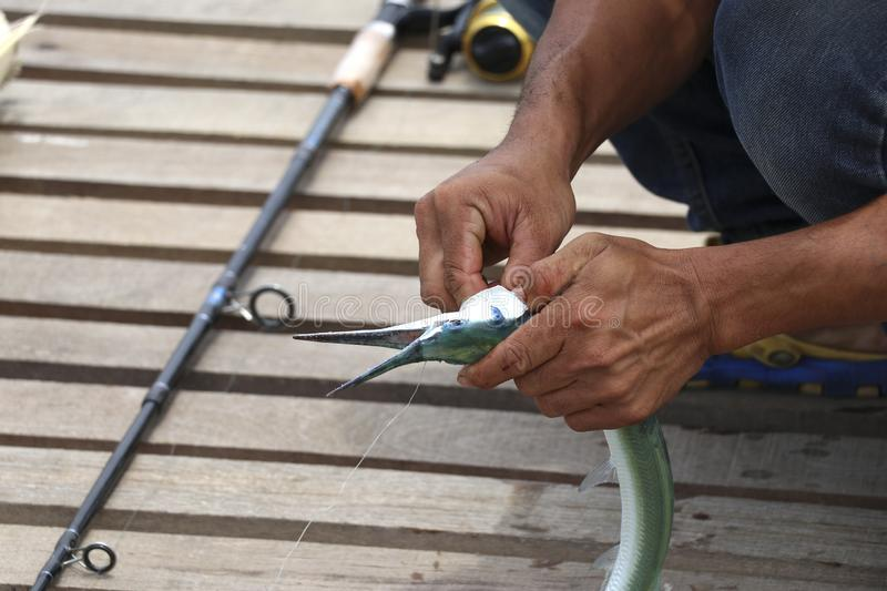 Fishermen are removing the hook from the fish. royalty free stock photo