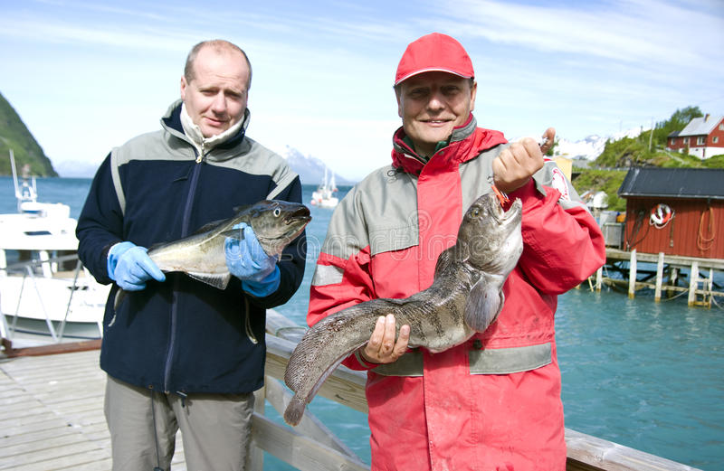 Fishermen and trophy. Two fishermen with their fishing trophy - catfish and coalfish stock image