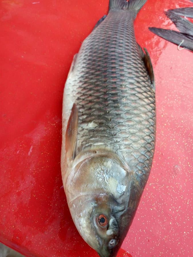 fishery fotografie stock