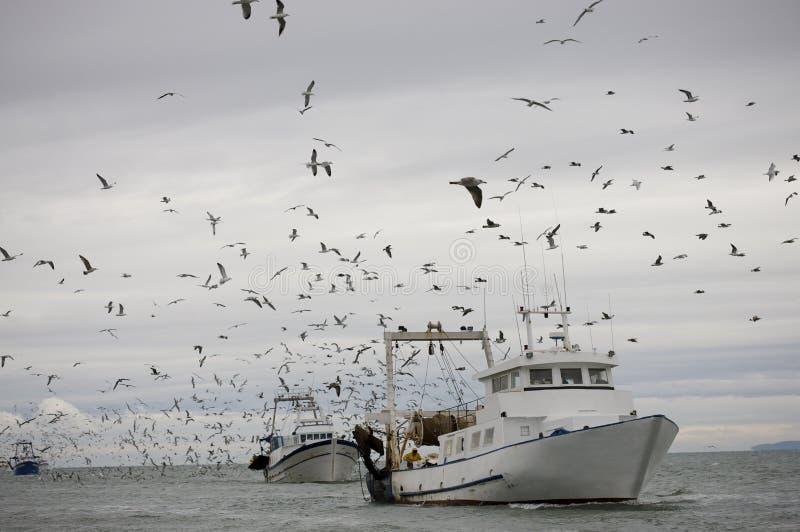 Fishery stock image