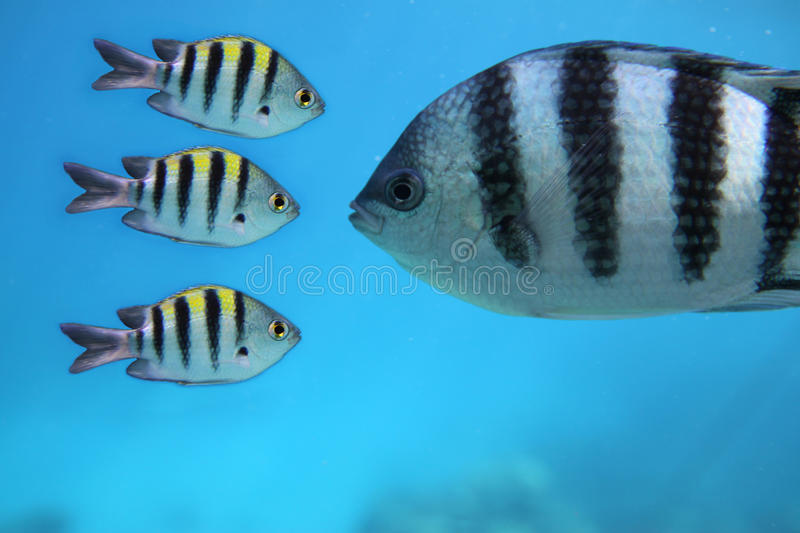 Download Fishes stock image. Image of lake, sight, relations, river - 19573857