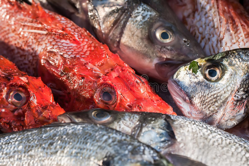 Download Fishes stock image. Image of marine, fish, market, dorsal - 25493755