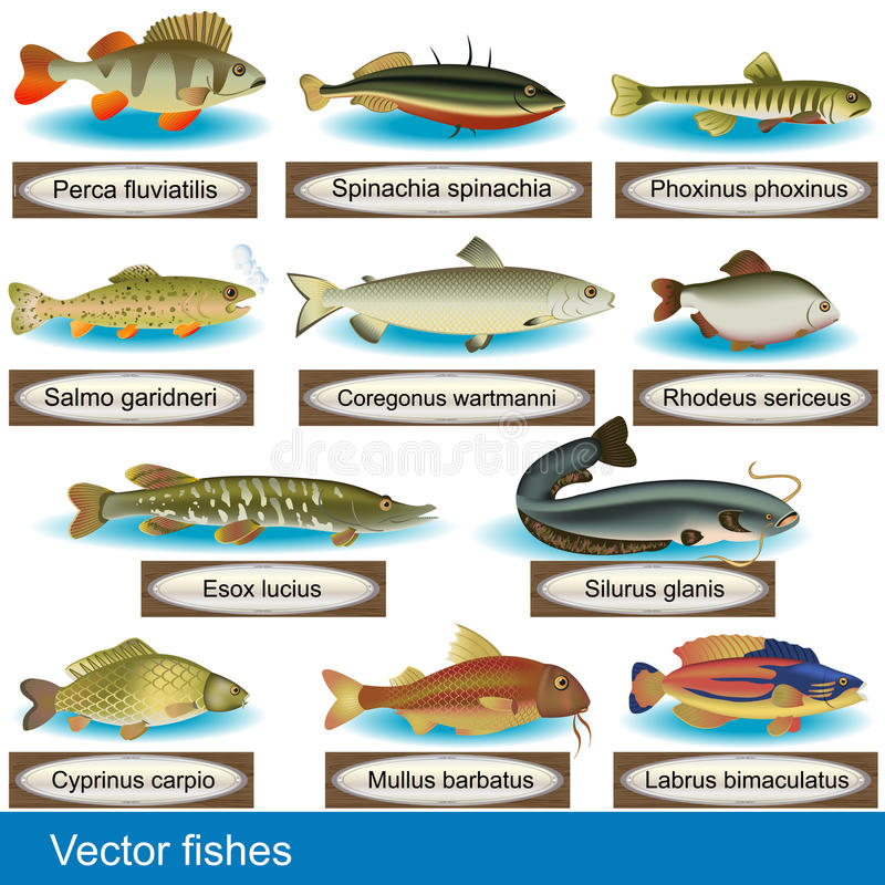 Download Fishes stock vector. Image of background, drawing, aquatic - 25658773