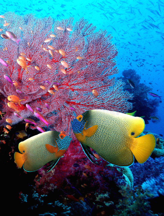 Fishes. Photo of coral fishes and reef