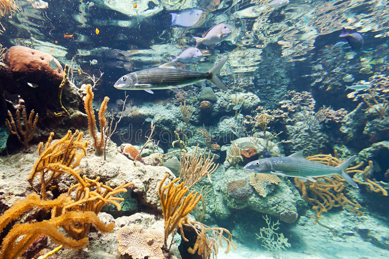 Download Fishes in Caribbean Sea stock image. Image of caribbean - 24687475