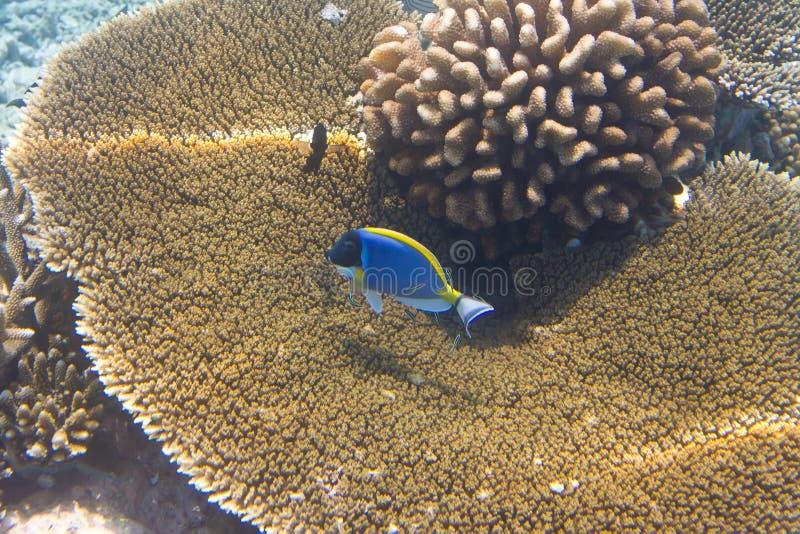 Fishes in corals. Maldives stock photo
