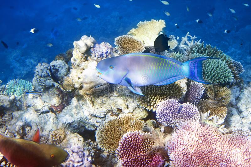 Fishes in corals. Maldives. Indian ocean stock photography
