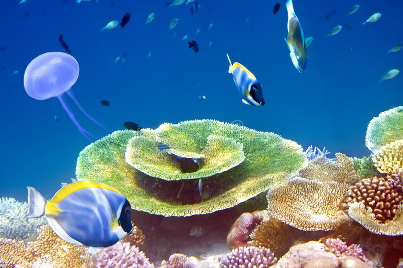 Fishes in corals. Maldives. Indian ocean stock photo