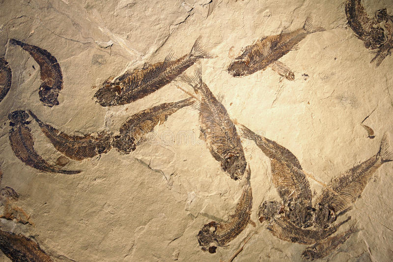 Fishes fossil royalty free stock photography