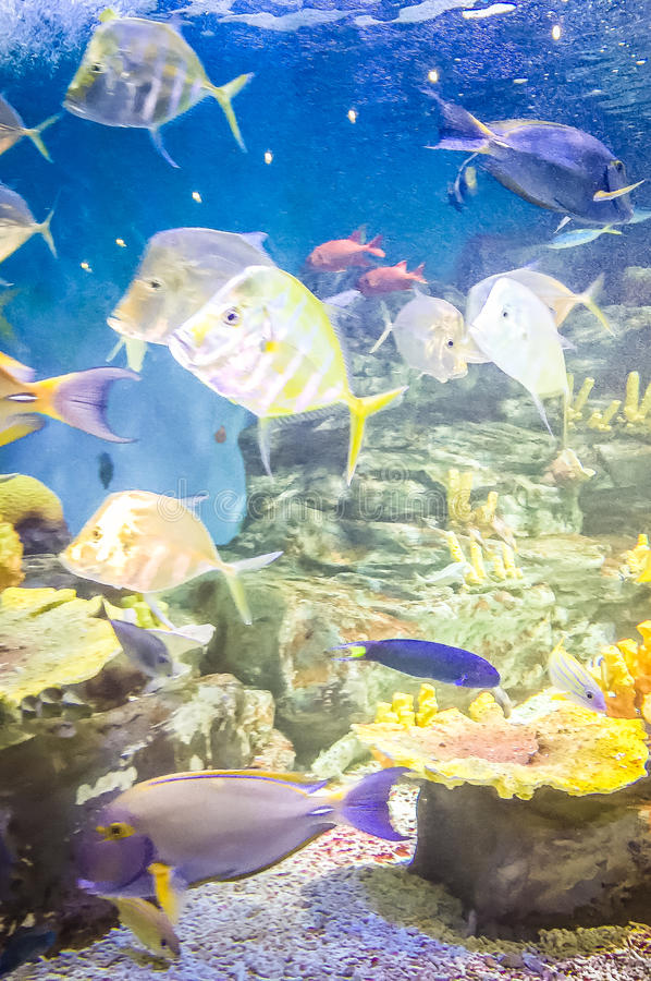 Fishes in Hanwah Aqua Planet Jeju, located nearby Seopjikoji and royalty free stock photography