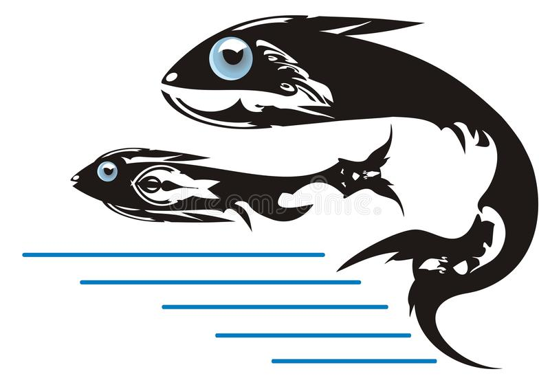 Fishes. Killer Whale Stock Photography