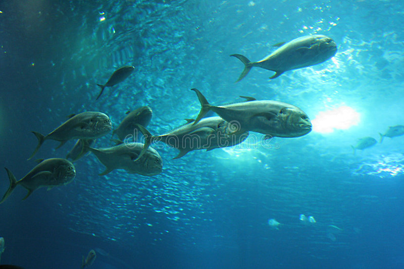 Download Fishes In Lisbon Oceanarium Stock Image - Image of tropical, blue: 230733