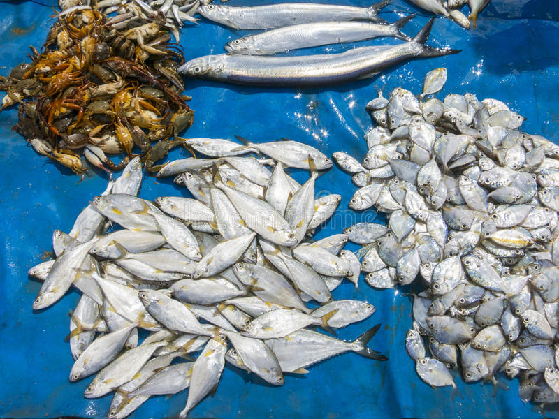 Fishes in market. Small fish market in Srilanka stock images