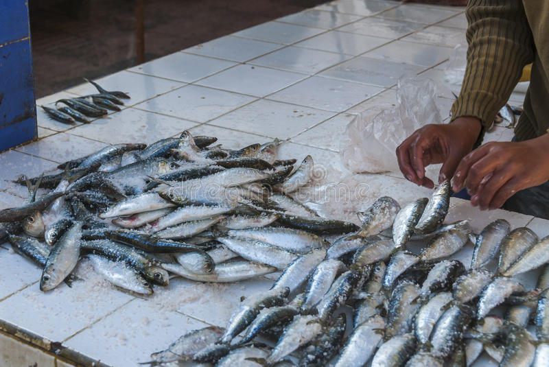 Fishes for sale in Morocco royalty free stock image