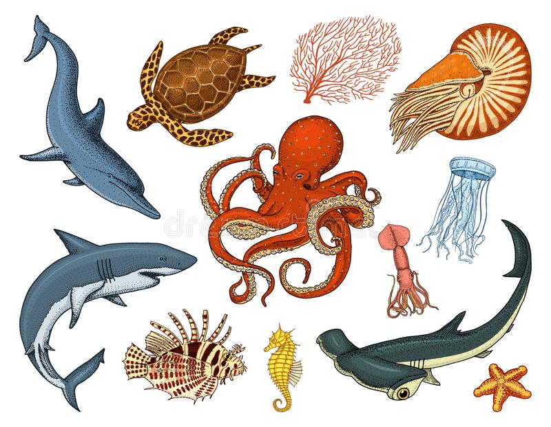 Fishes set or sea creature nautilus pompilius, jellyfish and starfish. octopus and squid, calamari. dolphin and. Hammerhead shark. green turtle and seahorse vector illustration