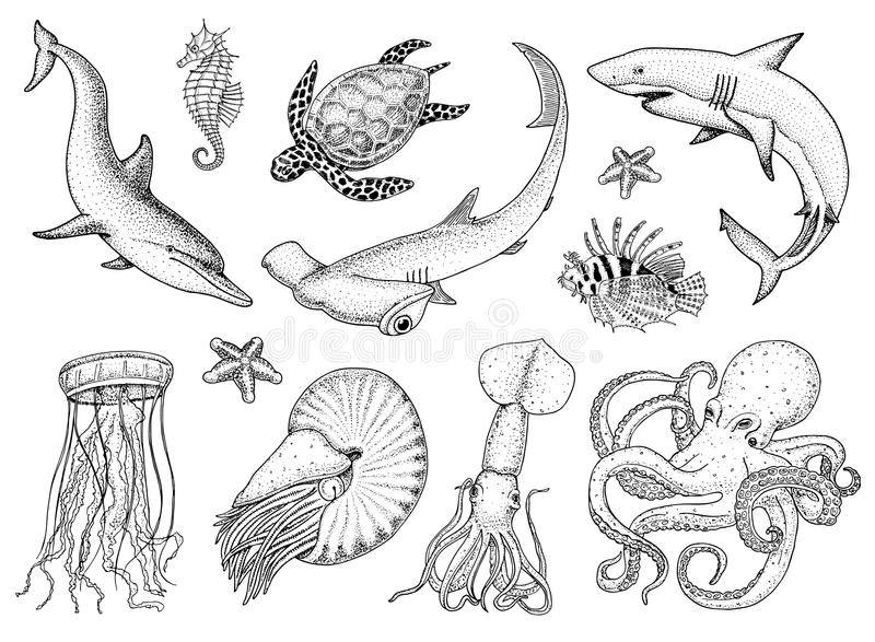 Fishes set or sea creature nautilus pompilius, jellyfish and starfish. octopus and squid, calamari. dolphin and. Hammerhead shark. green turtle and seahorse stock illustration