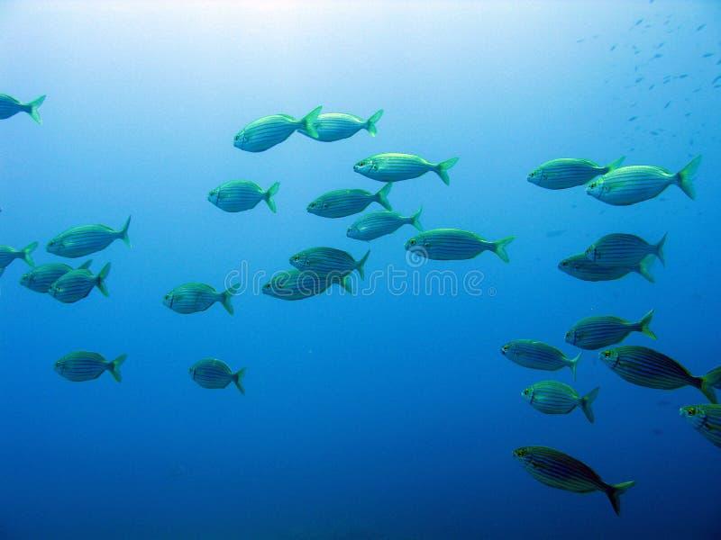Fish diving stock photo