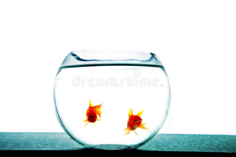 Download Fishes in tank stock photo. Image of fish, glass, white - 28508130