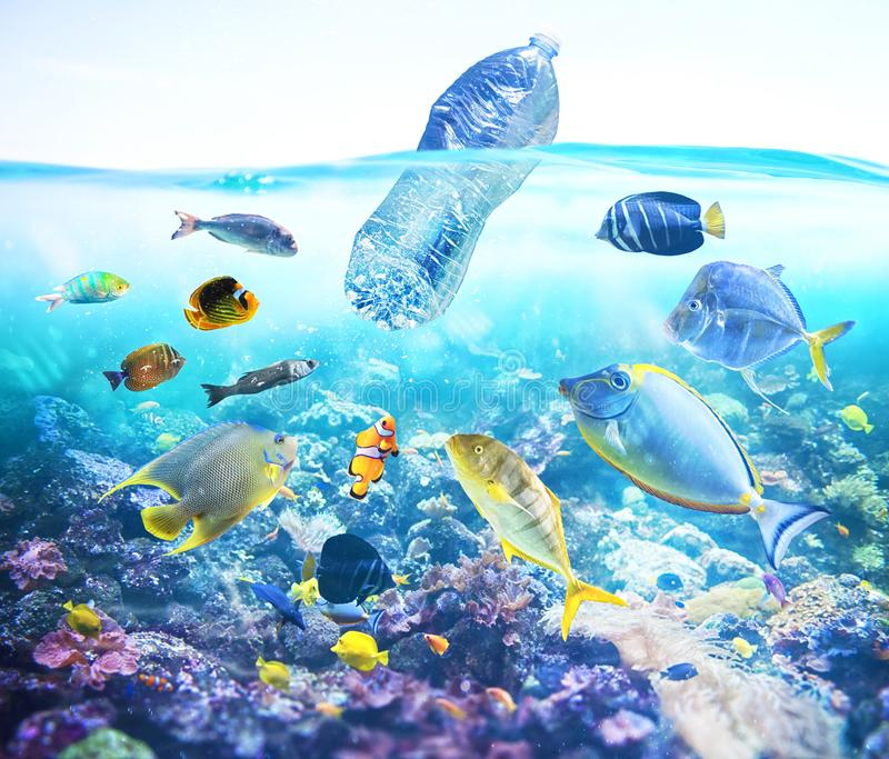 Fishes watch a floating bottle. Problem of plastic pollution under the sea concept. stock photos