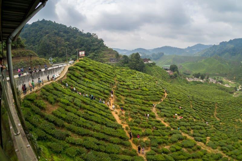 Fisheya view of Tea Plantations Cameron Highlands. Malaysia royalty free stock image