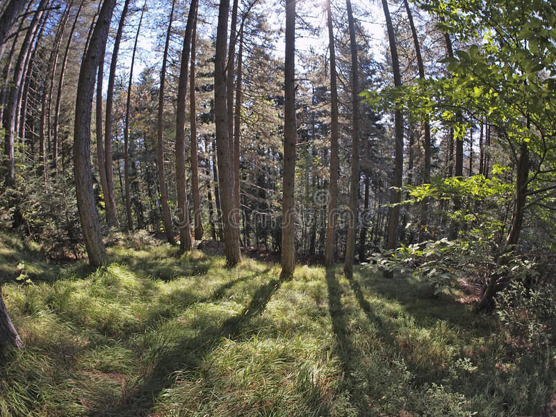 Download Fisheye forest landscape stock image. Image of nature - 21680239