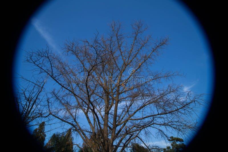 Fisheye niebieskie niebo i drzewa obraz stock