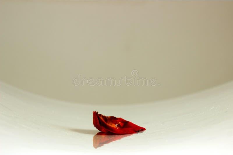 Fisheye a tiré d'un pétale de rose rouge sur le fond de table photographie stock