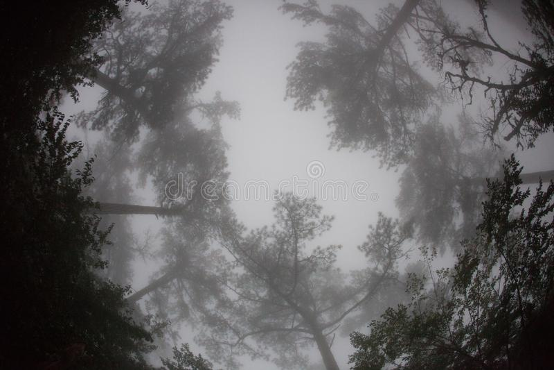Fisheyemening van de bovenkanten van de bomen in de mist stock foto's