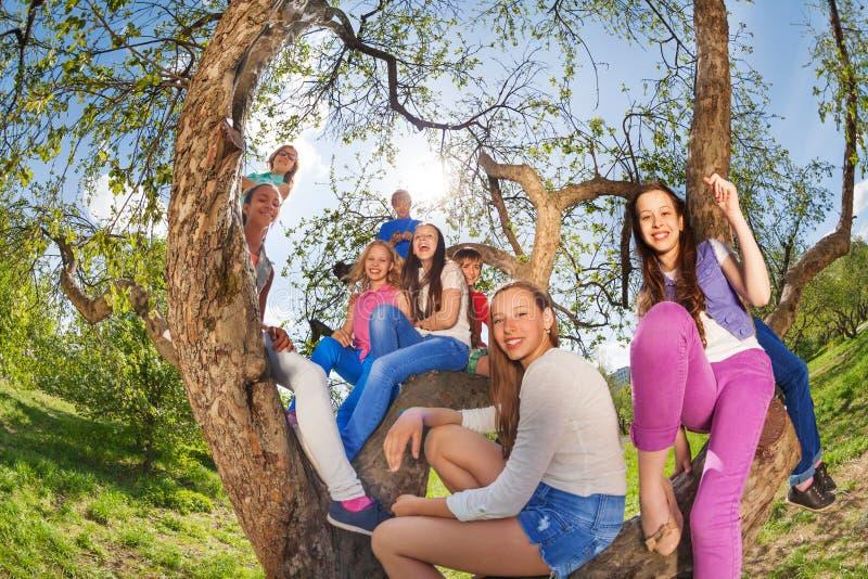 Fisheyemening van glimlachende tieners die op boom zitten stock afbeeldingen