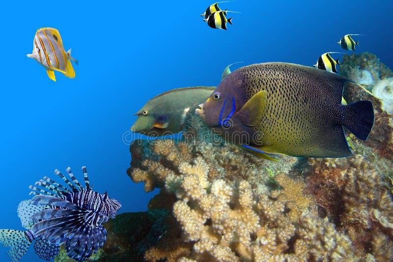 Fishfullreef royalty-vrije stock foto