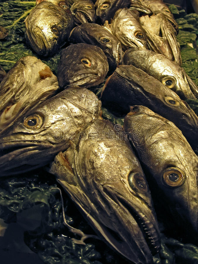Fishheads images libres de droits