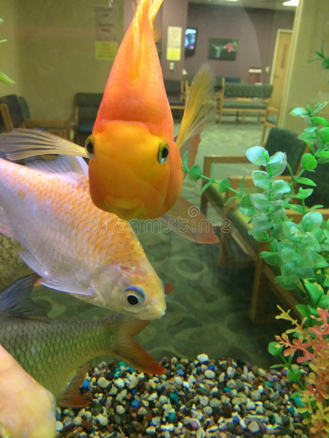 Fishies lizenzfreies stockfoto