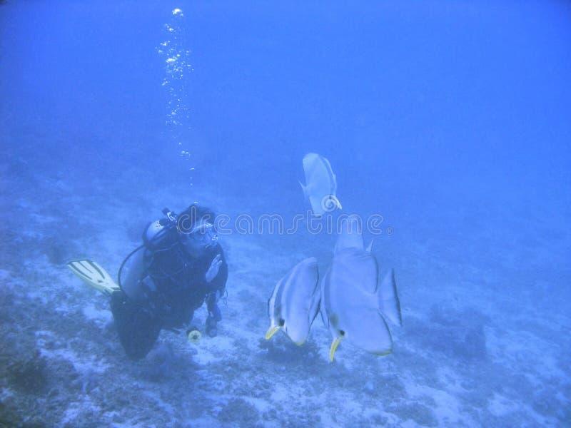 fishieshälsningar fotografering för bildbyråer