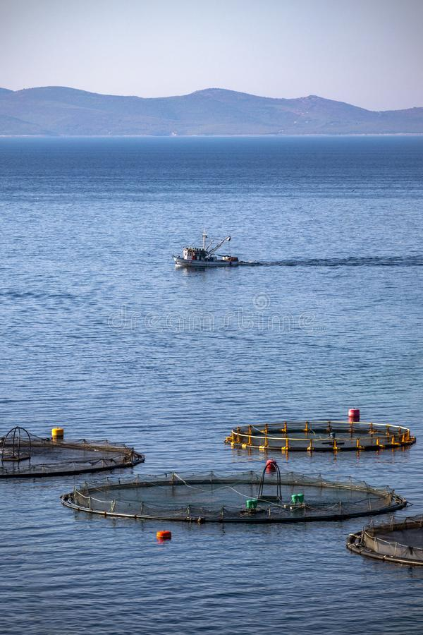 Fish cages early morning. Fishing boat feeding tuna in cages in fish farm in front of island Brac in Croatia royalty free stock photo