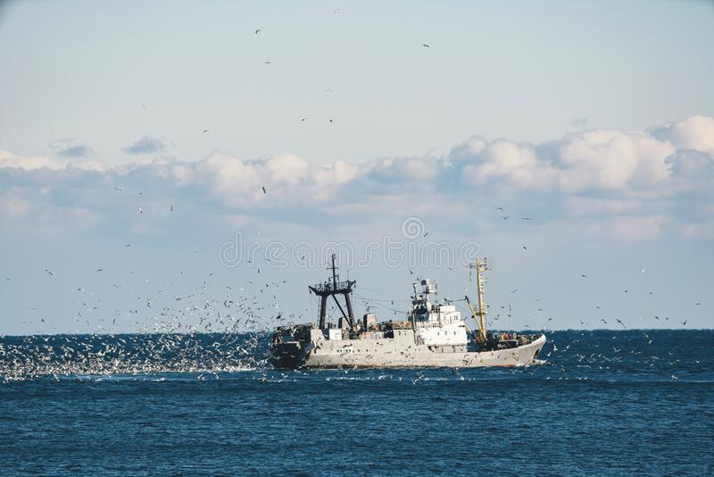 Fishing boat in the sea. Fishing boat trawling in the Black Sea surrounded by a mass of seagulfs royalty free stock photography