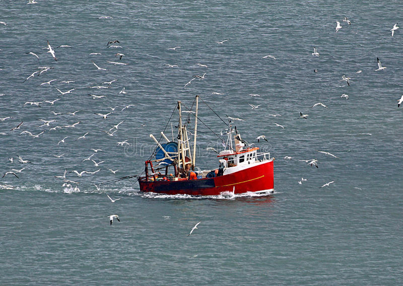 Fishing boat and seagull flock. Flock of seagulls surrounding fishing trawler boat in ocean royalty free stock photo