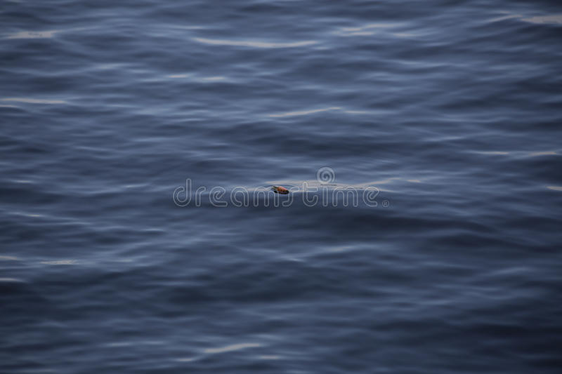 Fishing Bobber Floating on the Water royalty free stock images