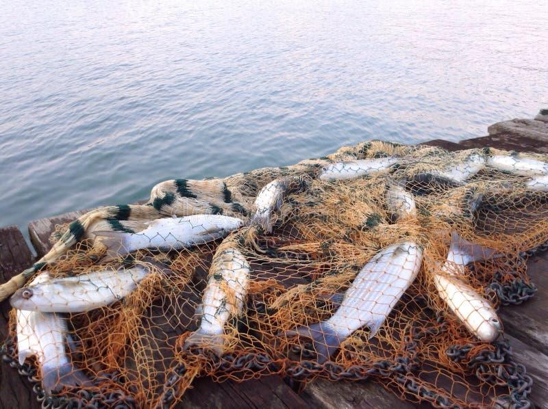 Fishing bridge. Catch of sea mullet fish stock image