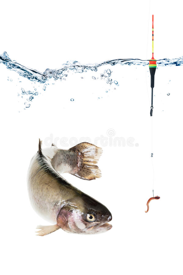 Fishing concept, hook with bait and float, fish isolated on white royalty free stock image