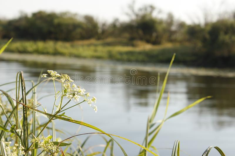 Fishing at dawn, hobby, relax. Fishing rod with a catch stock image