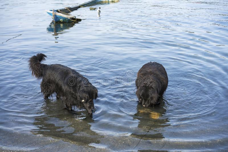 Fishing dogs searching fishes in the sea stock photos