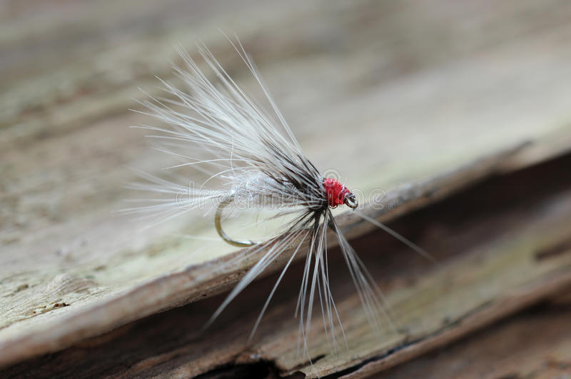Fishing fly stock images